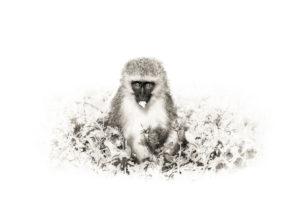 Monkey chow Hi-Res 2000px