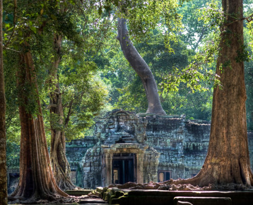 Cambodia Ta Prohm (ALVA006)