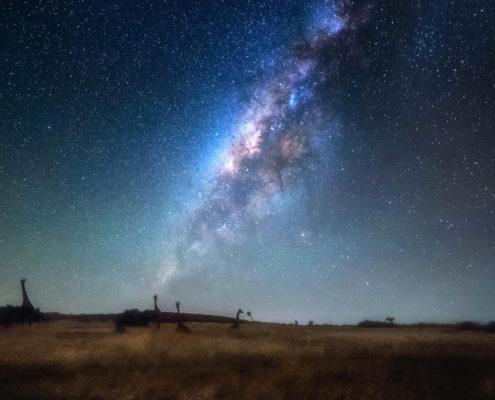 Giraffes by Starlight (MAGE006)