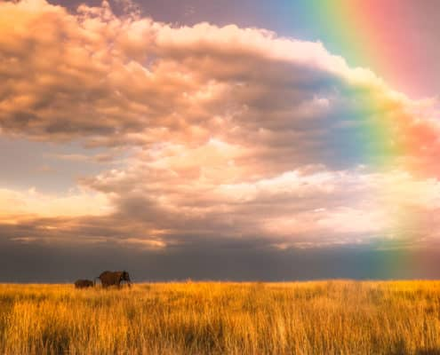 Kenya Rainbow