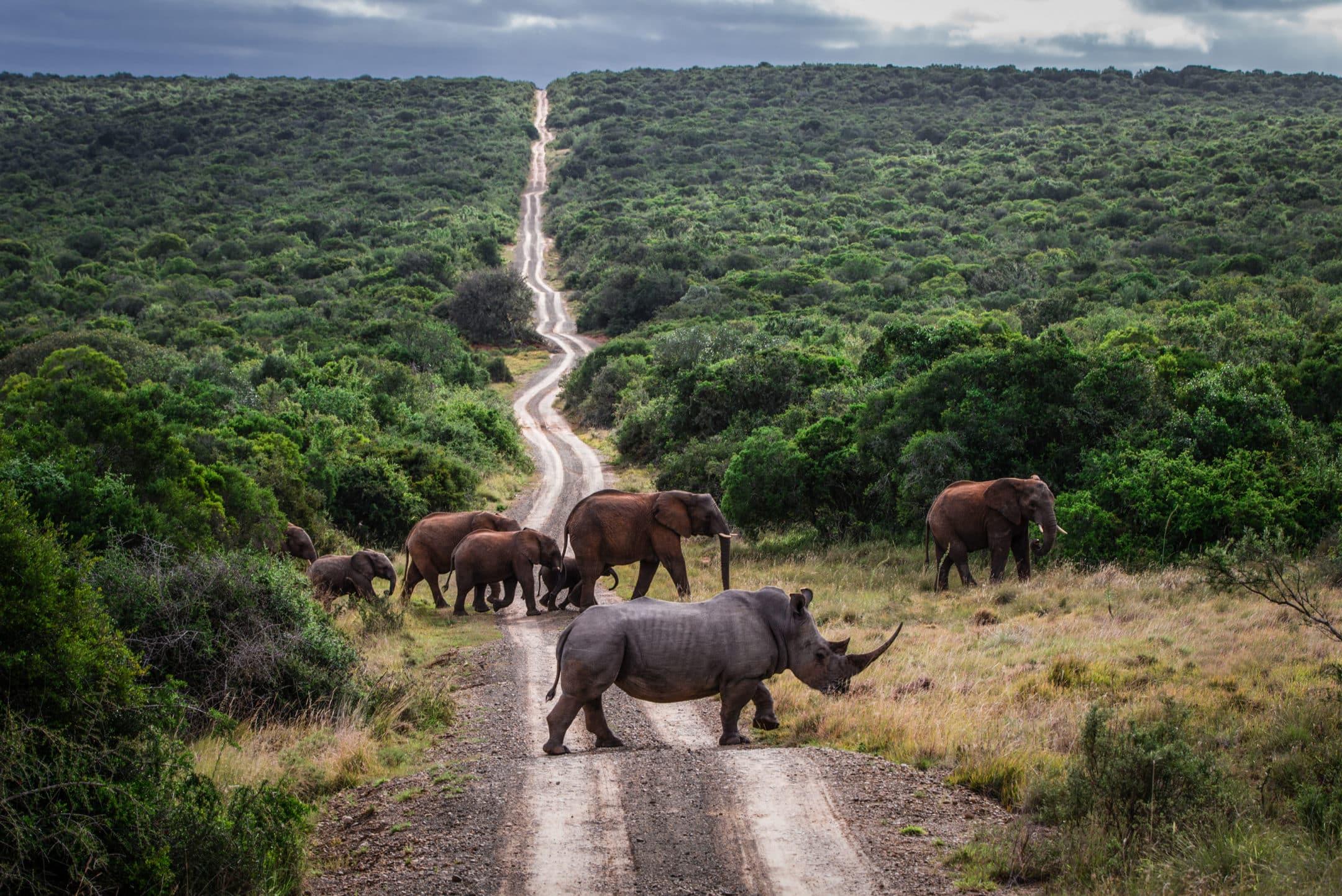 Rhino and Elephants