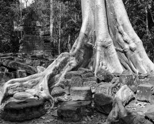 Silver Tree of Cambodia