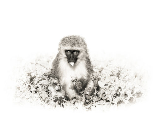 Monkey Chow (RYAB001)