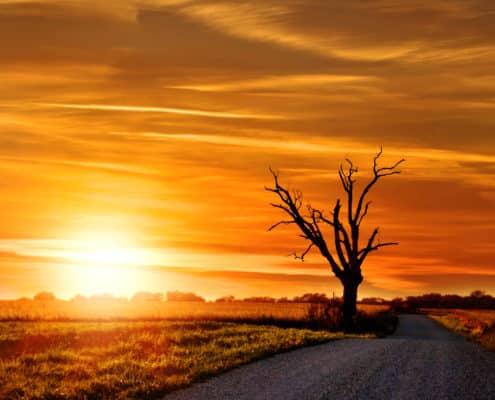 (ToHB002)Country Life