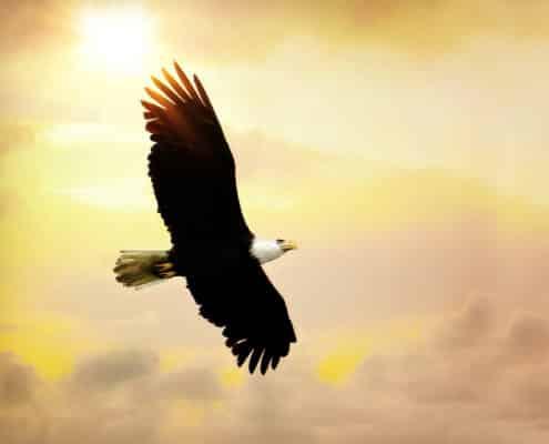 (ToHB009)Strength in my Wings
