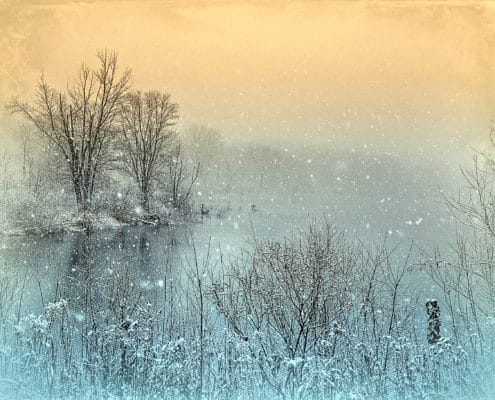 (ToHB011)The Colors of Winter