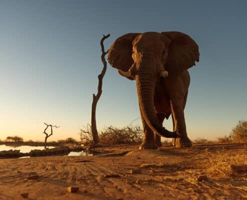 (LIOT005)Madikwe 1-South Africa