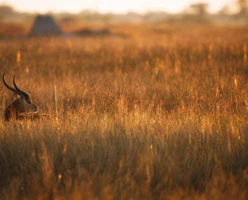 (LIOT012)Xakanaxa1-Botswana