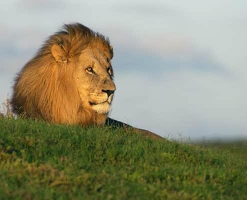 Pro Photo Safaris - Iky's Photographic, Shamwari Game Reserve